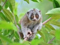 10 vrlo slatkih ubica životnjskog carstva