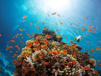 Zanimljivosti o podvodnim životinjama