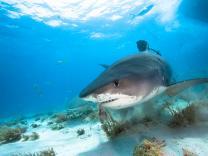 30 zanimljivih činjenica o morima i okeanima