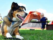Ako planirate da kampujete sa svojim psom, obavezno pročitajte ovo